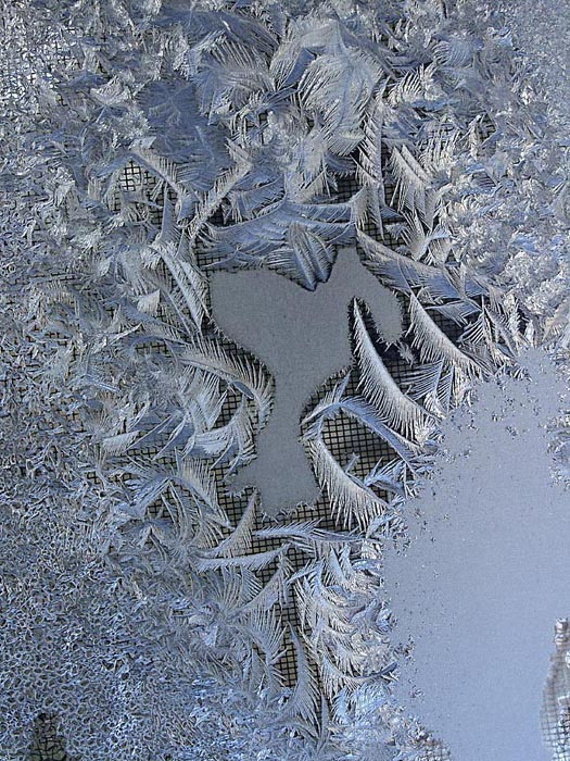 Frost on window, waterloo, canada
